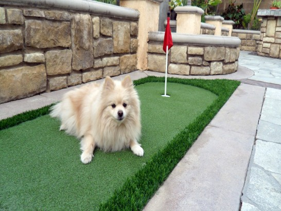 Artificial Grass Photos: Artificial Turf Cost Loudon, Tennessee Putting Green Flags, Backyard Landscape Ideas