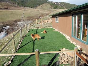 Artificial Grass Photos: Artificial Turf Cost McEwen, Tennessee Design Ideas, Dogs Runs