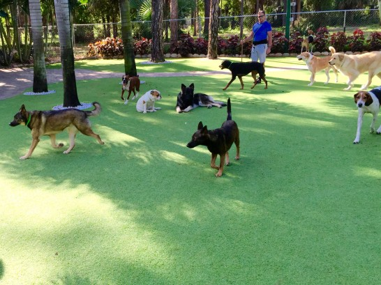 Artificial Grass Photos: Synthetic Grass Sevierville, Tennessee Artificial Turf For Dogs, Grass for Dogs