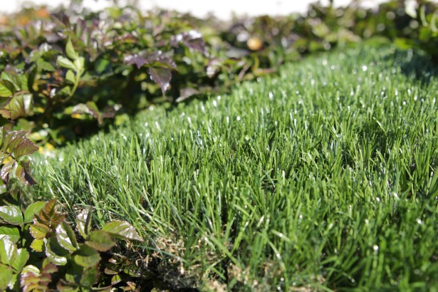 Silky Artificial Turf